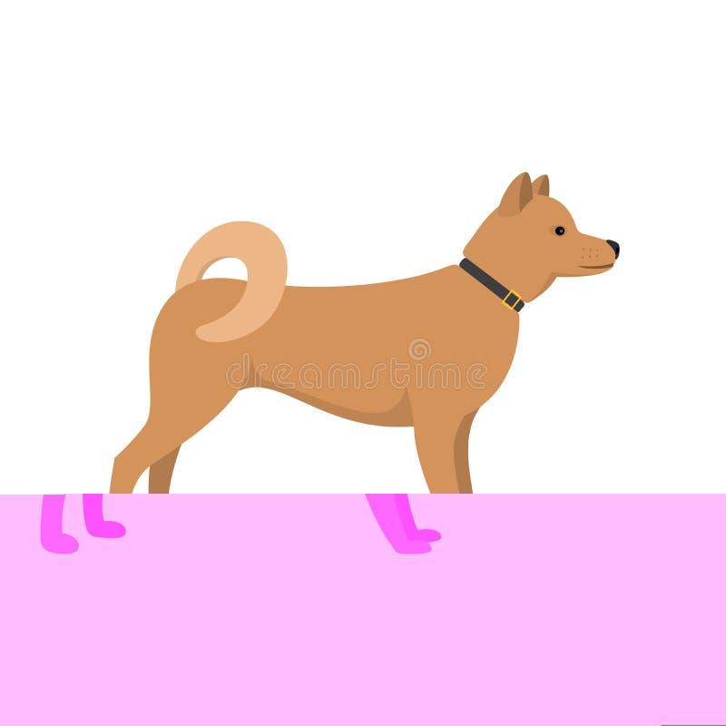 Akita Inu - ασιατική φυλή σκυλιών διανυσματική απεικόνιση