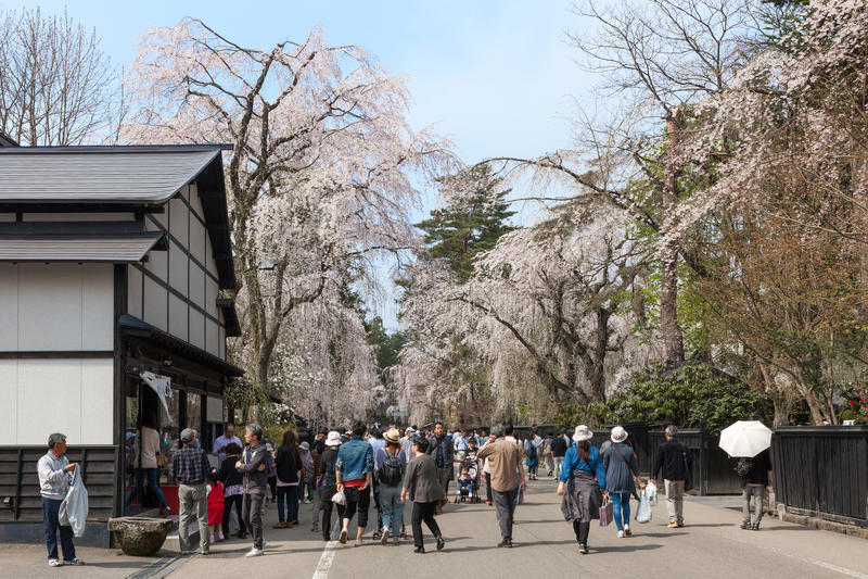Download Akita, Japón - Abril 27,2014: Sakura En Distrito Del Samurai Imagen editorial - Imagen de colorido, cereza: 64213330