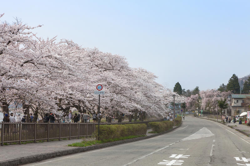Akita, Japan - April 27,2014: Kirschblüte in Kikonai-Flussufer stockfoto