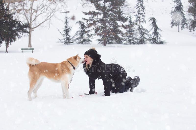 Akita jest prześladowanym całować jej właściciela na śnieżnym dniu w parku Zima przeciw zdjęcia royalty free