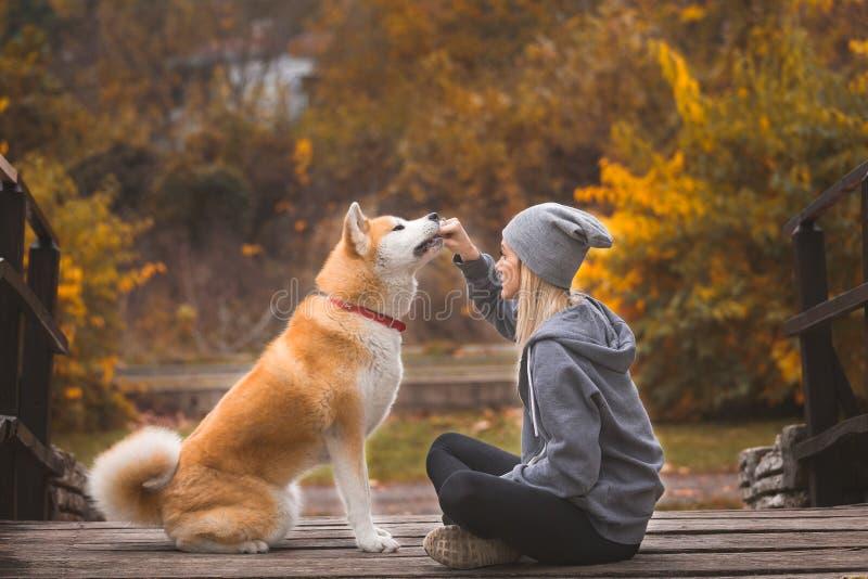 Akita pies i swój żeński właściciel cieszy się jesień w parku zdjęcie royalty free