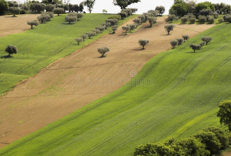 Aksamit ziemia zdjęcie royalty free