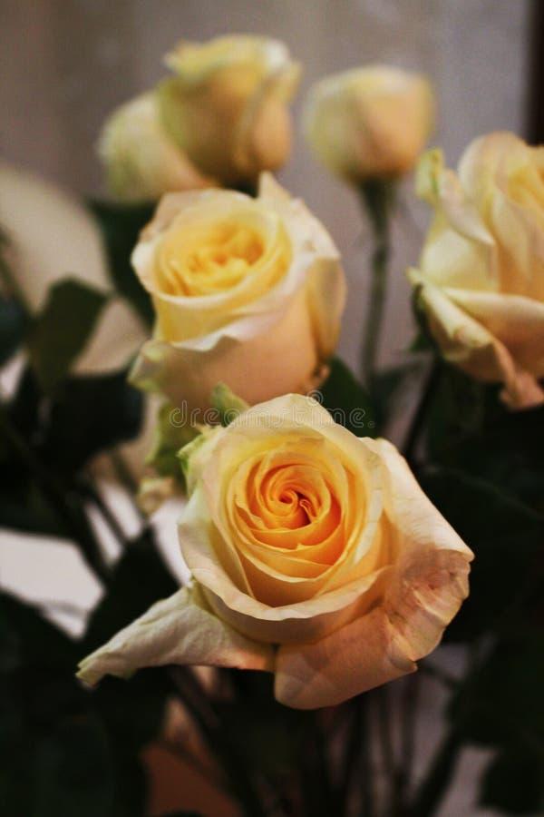 Aksamitne róże dla mój miłości fotografia royalty free