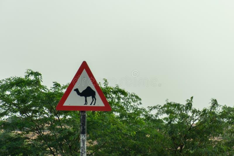 Akta sig av kamel; att korsa undertecknar i en ökenväg eller gata i Förenadeen Arabemiraten arkivfoto