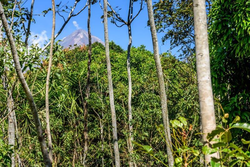 Aktiv Pacaya vulkan & skogsmark arkivbilder