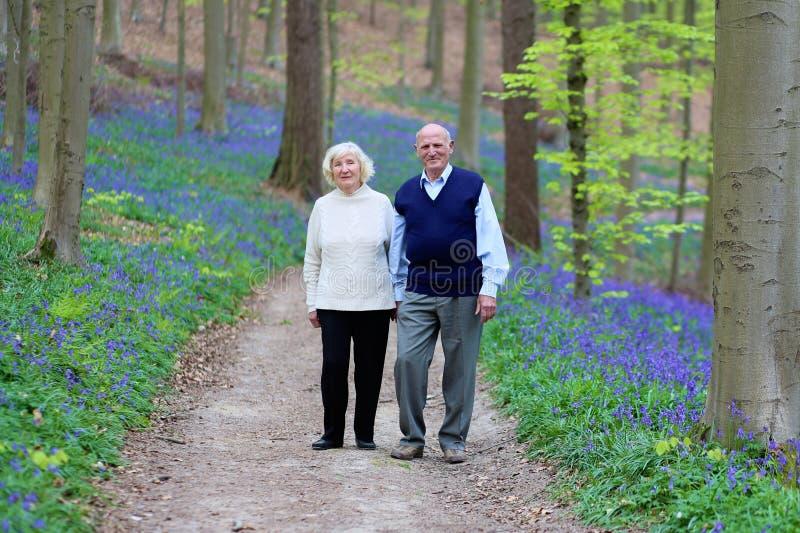 Aktive ältere Paare, die im Wald wandern stockfotografie