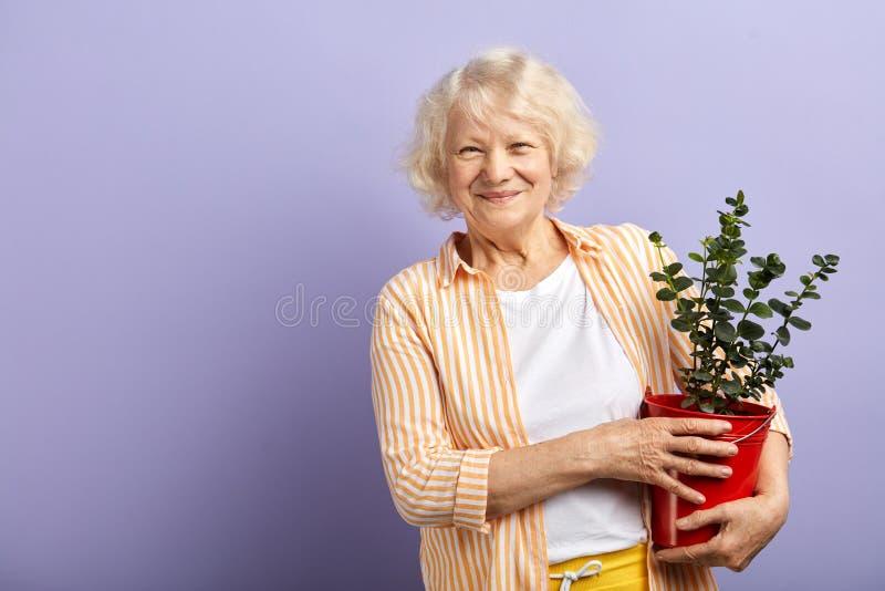 Aktive ?ltere Frau, die an der Kamera h?lt Topfpflanze in den H?nden l?chelt lizenzfreie stockfotos