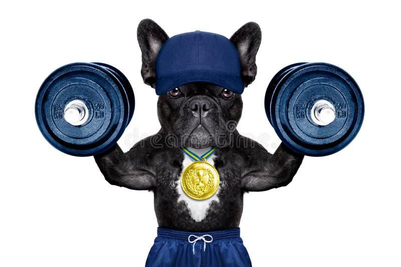 Aktiver Sporthund stockbilder