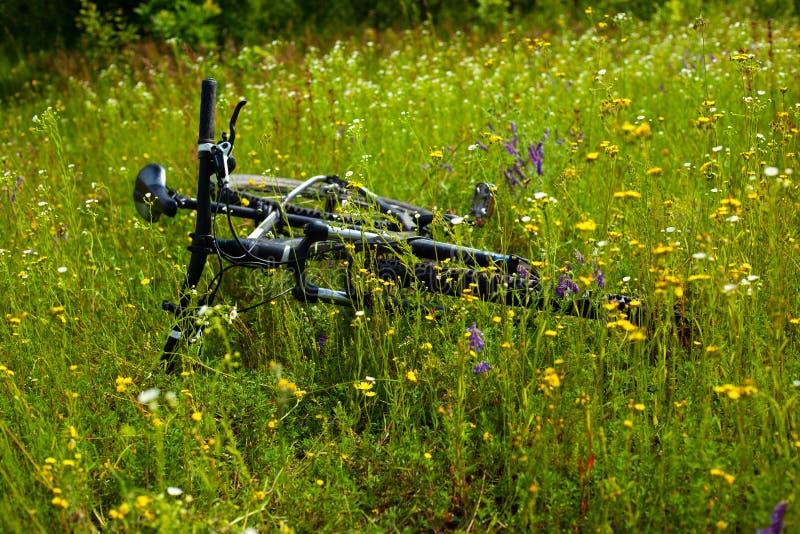 Aktives Lebensstilkonzept, fahrend auf Natur rad Mountainbike unter Wildflowers auf einem Sommergebiet stockbilder