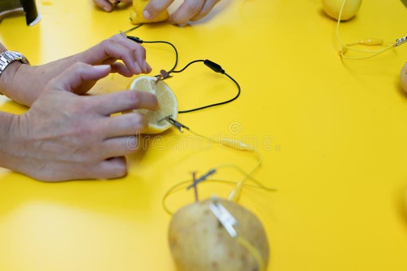 Aktivitet för potatisbatteriSTAM med potatisar, citroner, alligatorcl royaltyfria bilder