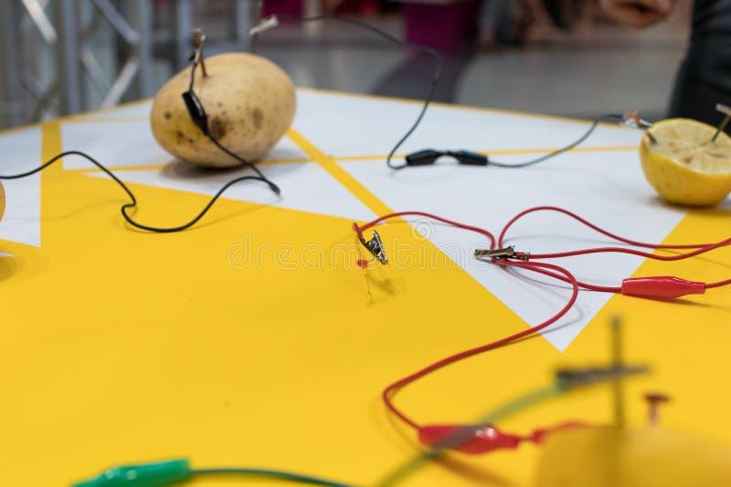 Aktivitet för potatisbatteriSTAM med potatisar, citroner, alligatorcl fotografering för bildbyråer