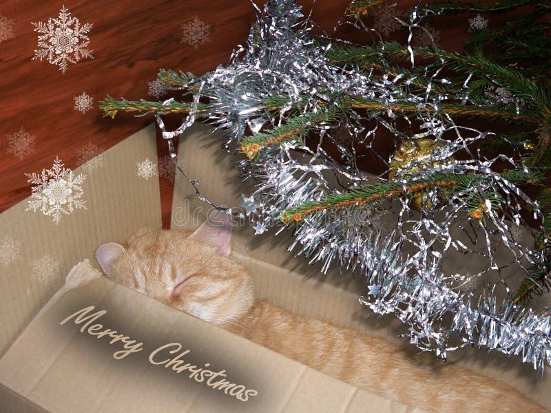 aktuell jul royaltyfria bilder