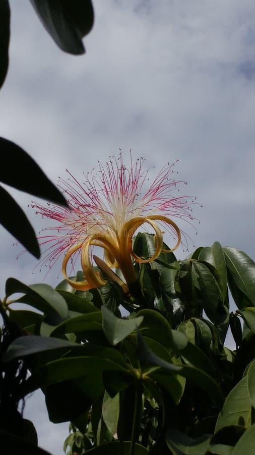Aktuelle Blume stockfotografie