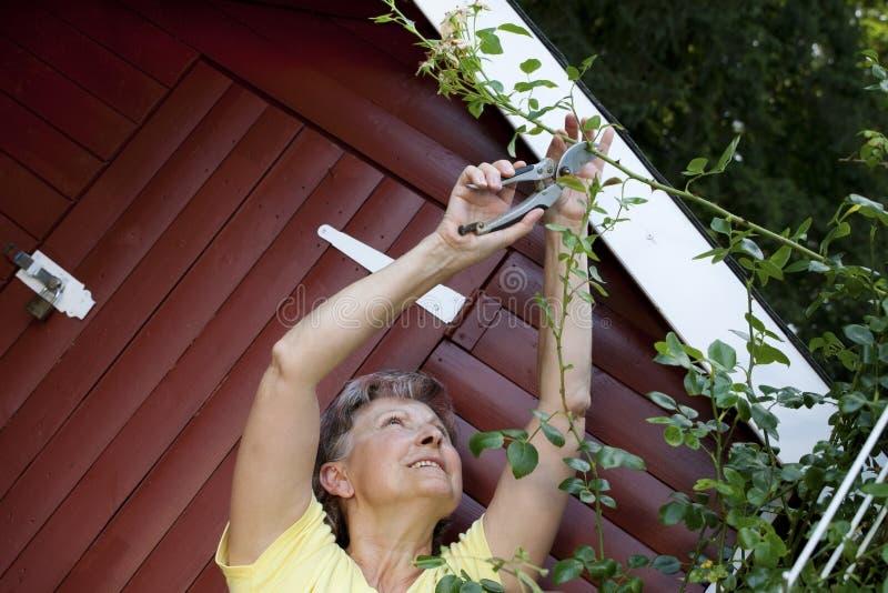 Aktywna kobieta przy ogródem różanym zdjęcia stock