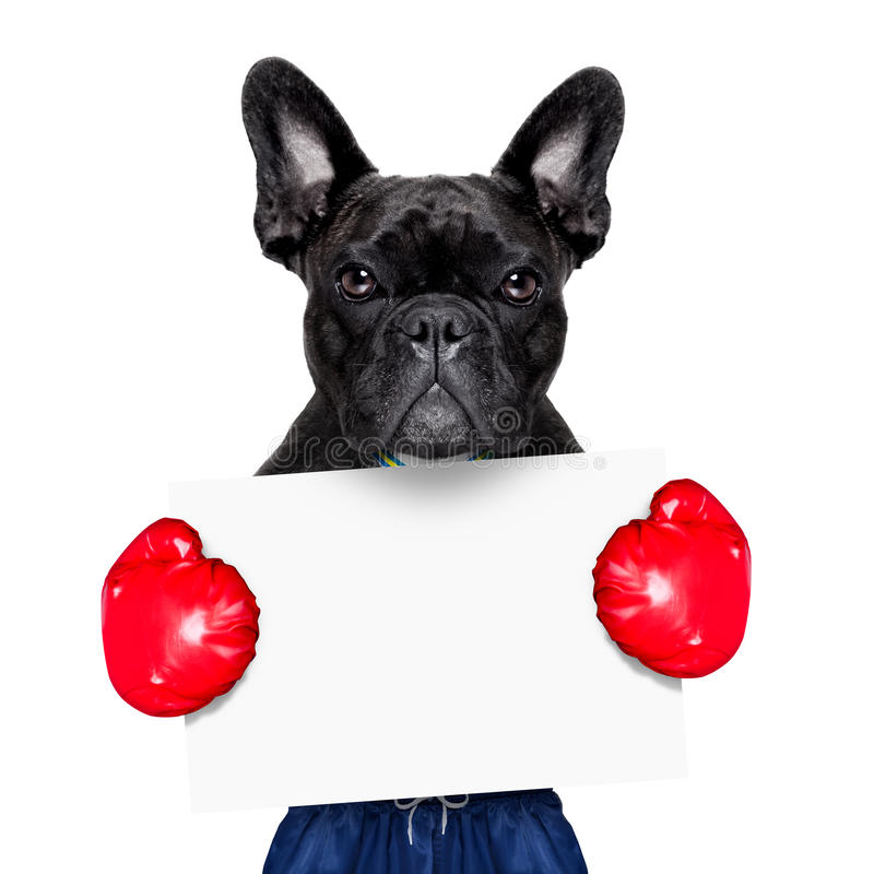 Aktywny sporta pies fotografia stock