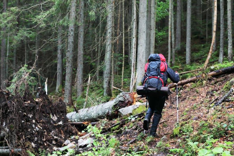 Aktywny zdrowy mężczyzna wycieczkuje w pięknym lesie obraz stock