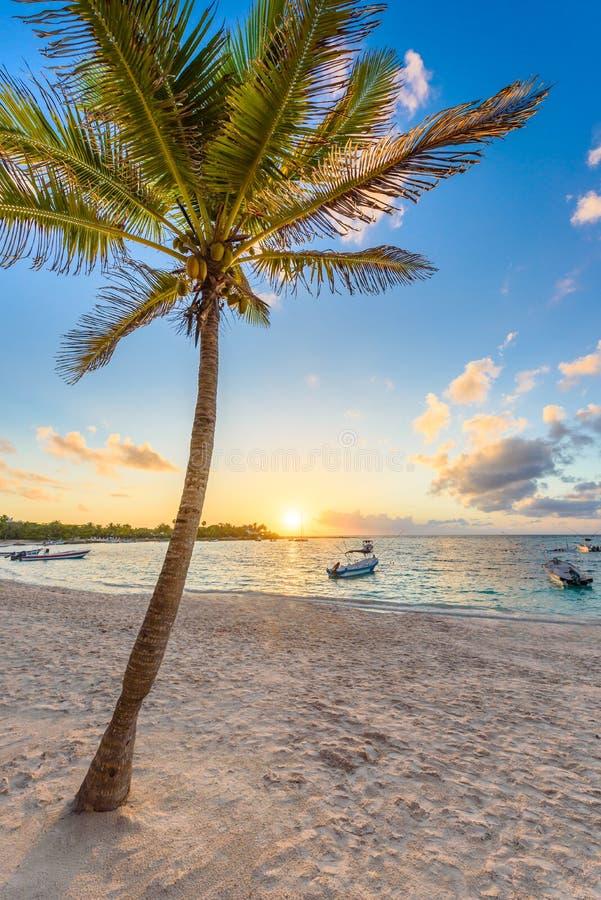 Akumal fjärd - karibisk vit strand i Riviera Maya, kust av Yucatan och Quintana Roo, Mexico arkivbilder