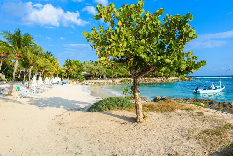 Akumal - paradise bay at Akumal with tropical beach in Quintana Roo, Mexico - turtle beach at caribbean coast stock images