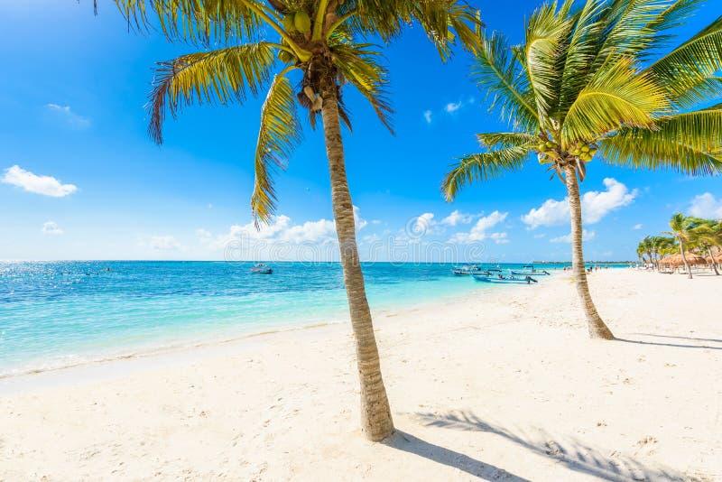 Akumal strand - paradisfjärdstrand i Quintana Roo, Mexico royaltyfri foto