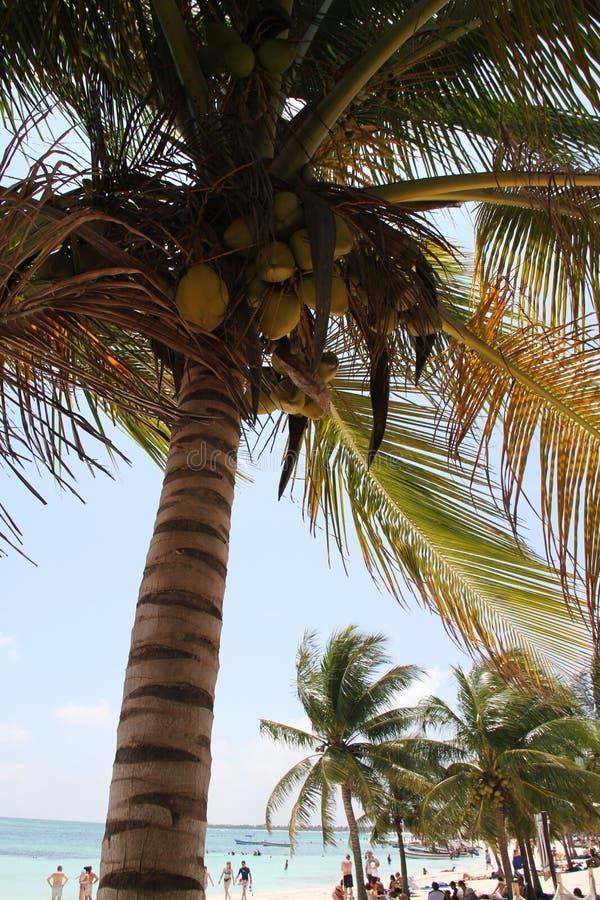 Akumal Tortuga strand fotografering för bildbyråer
