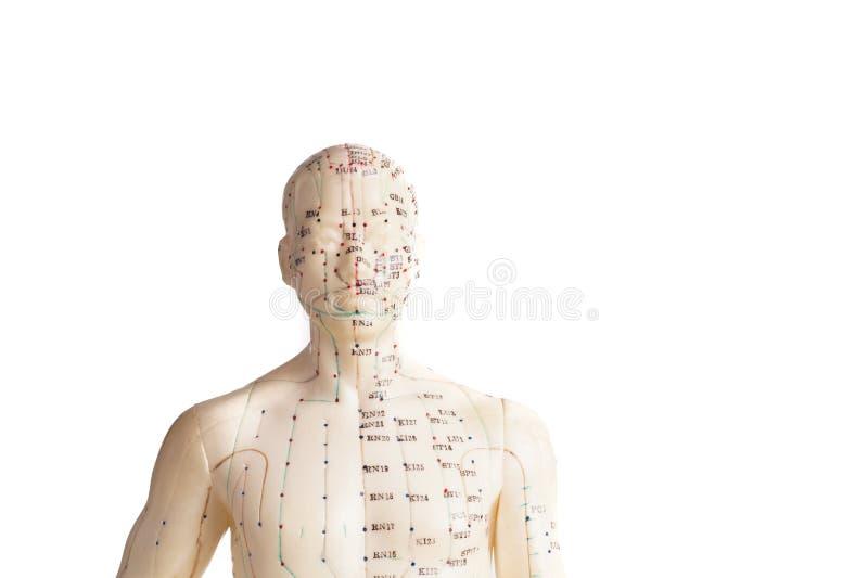 Akupunkturmodell av människan arkivfoto