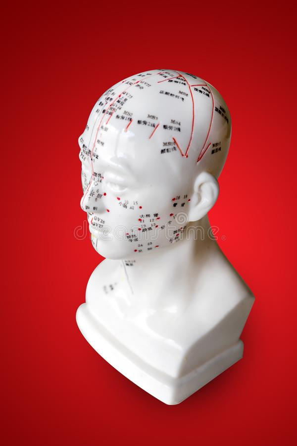 Akupunkturpunkte auf Hauptzahl Modell stockfotografie