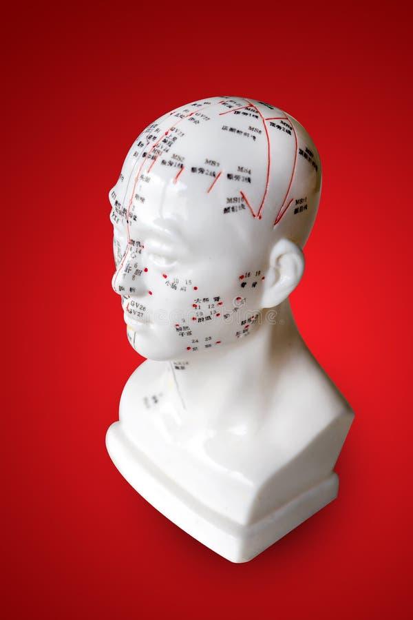 Akupunkturpunkter på huvuddiagramet modell arkivbild