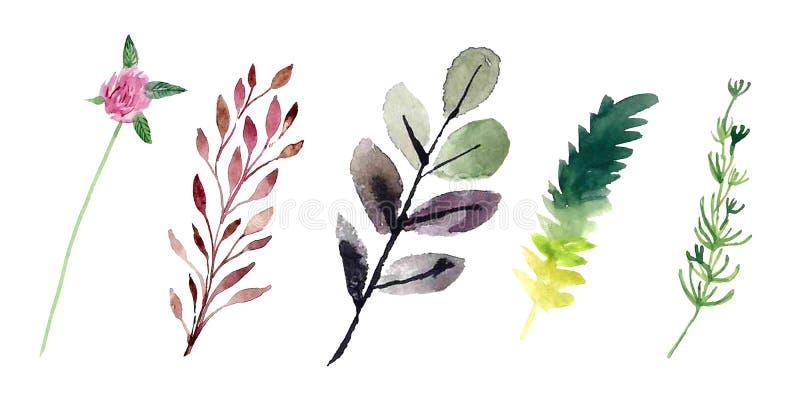Akvarellfältväxter Inst?llda blommor stock illustrationer