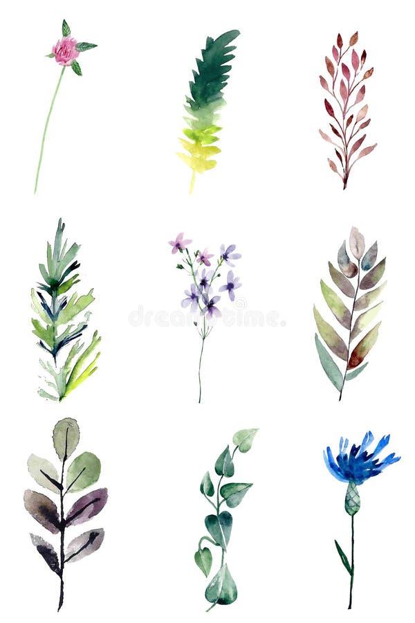 Akvarellfältväxter royaltyfri illustrationer