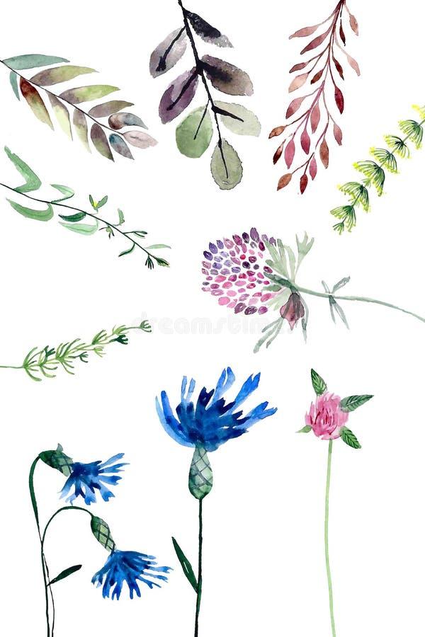 Akvarellfältväxter stock illustrationer