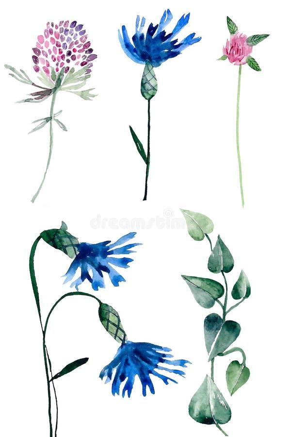 Akvarellfältväxter vektor illustrationer