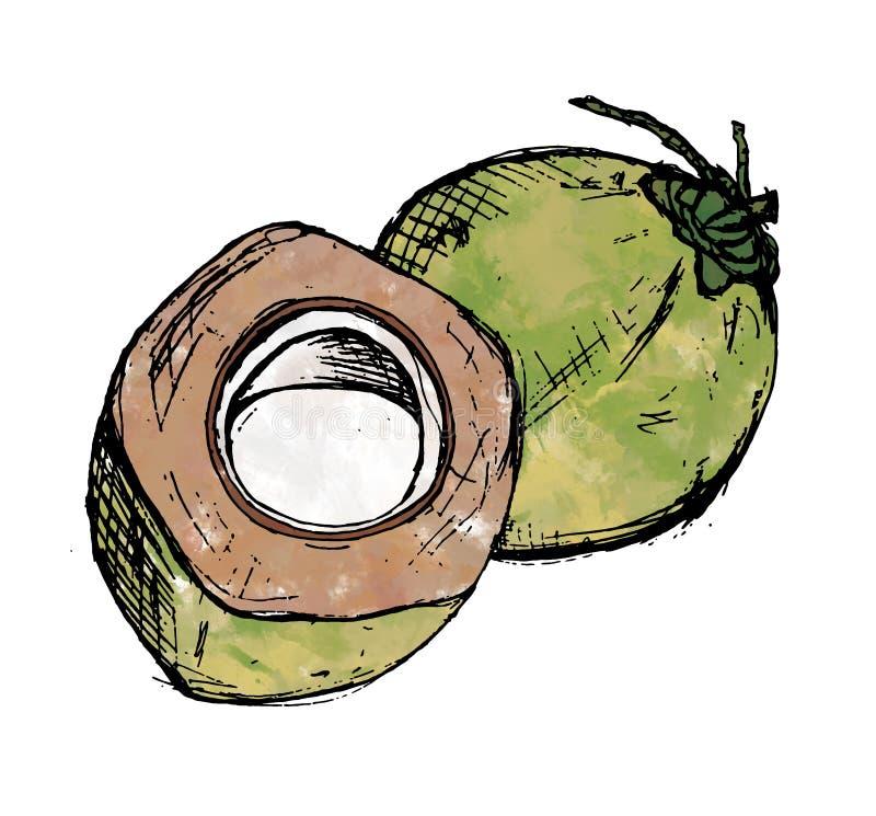 Akvarellillustration för två grön kokosnötter royaltyfri illustrationer