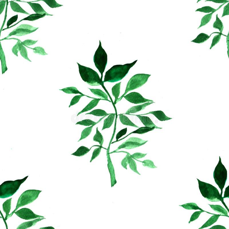 Akvarellmodell med gröna sidor stock illustrationer