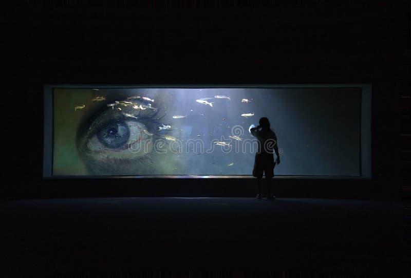 akvariumöga royaltyfri bild