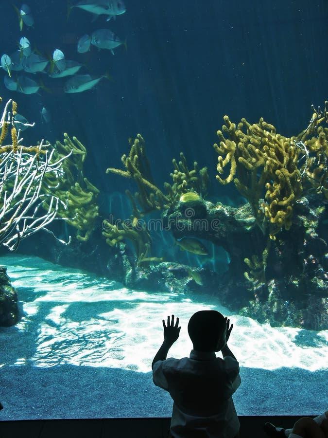 akvarium 2 royaltyfria foton
