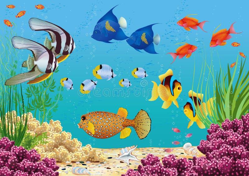 Akvarium stock illustrationer