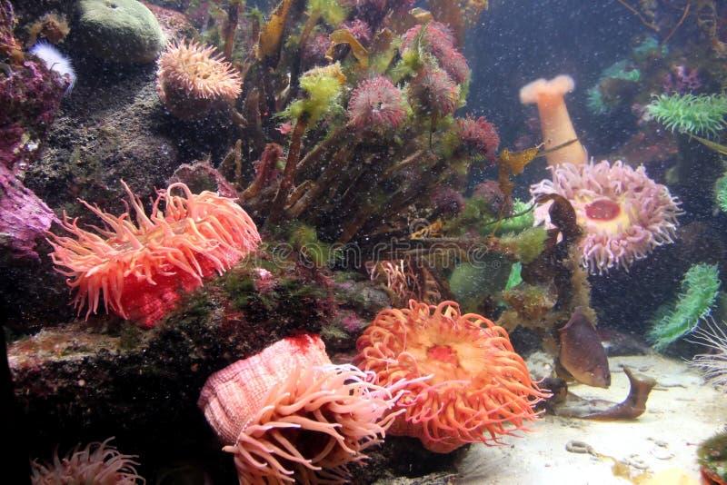 akvarium 5 royaltyfri bild