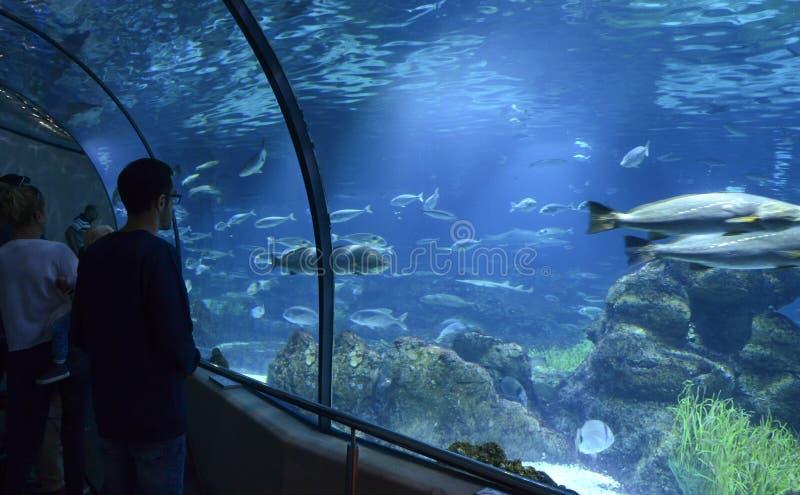 Akvarium de Barcelona, Spanien arkivfoton