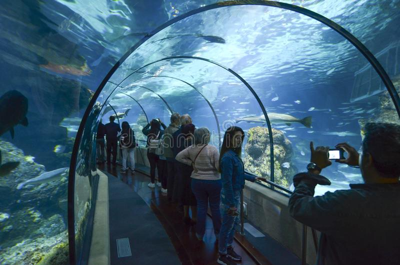 Akvarium de Barcelona, Spanien arkivbild