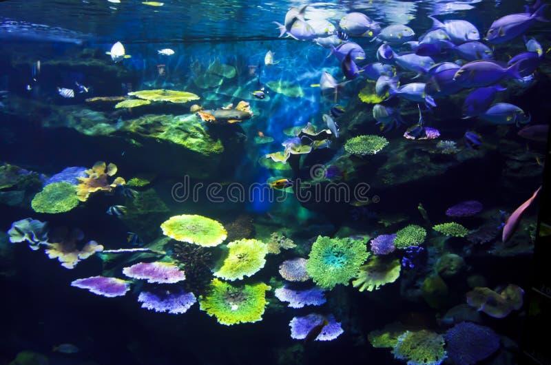 Akvarium med fiskar och reven arkivfoto