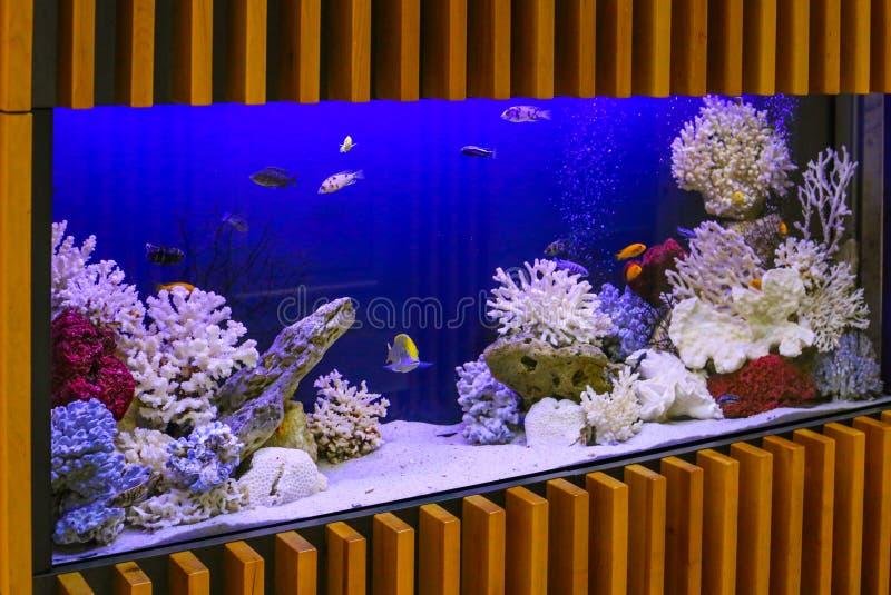 Akvarium med v?xter och tropiska f?rgrika fiskar arkivfoton