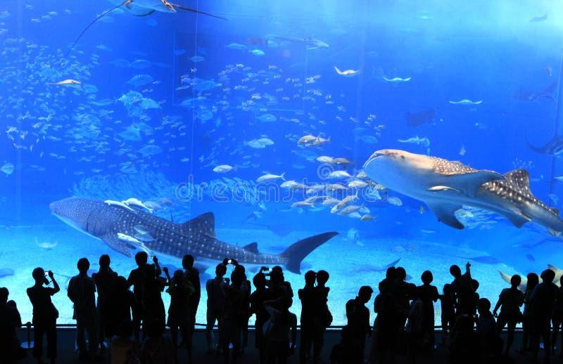 akvarium okinawa arkivbild