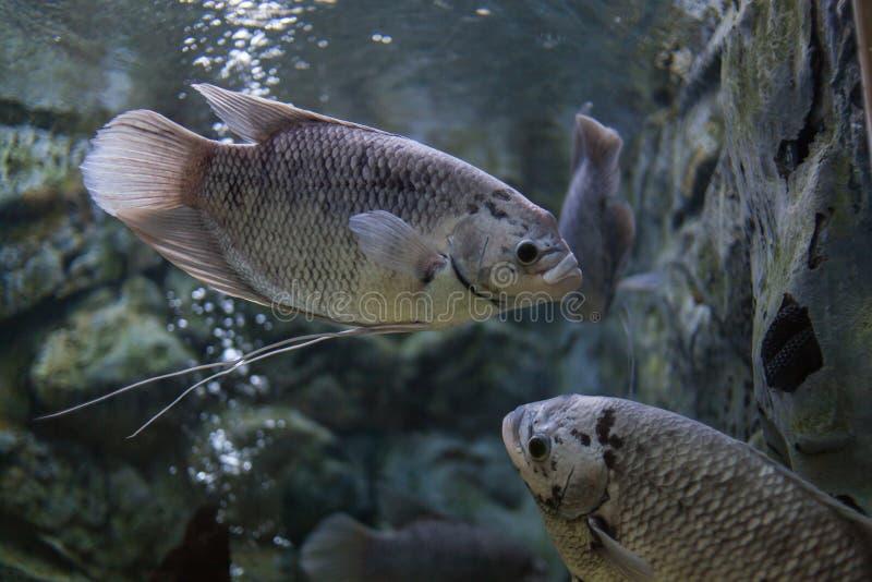 Akvarium Thailand arkivfoton