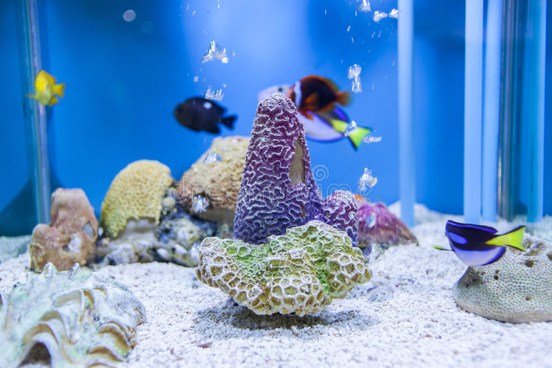 Akvarium Thailand arkivbild