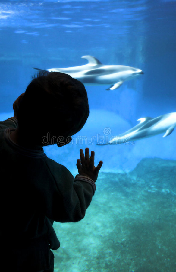 akvariumbarnsilhouette royaltyfri bild