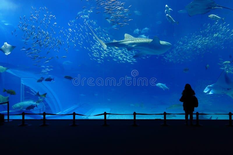 akvariumbehållare royaltyfria bilder