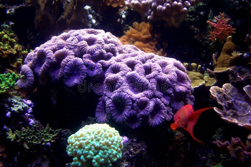 Akvariumkorall & fisk royaltyfri fotografi