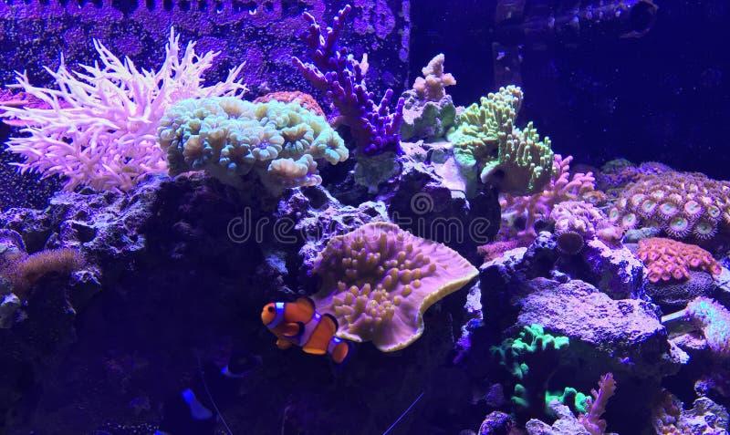 Akvariumskott arkivbild