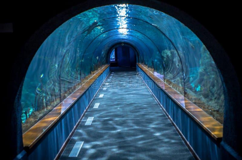 Akvariumtunnel arkivbilder