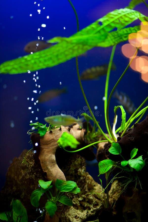 akvariumväxter fotografering för bildbyråer